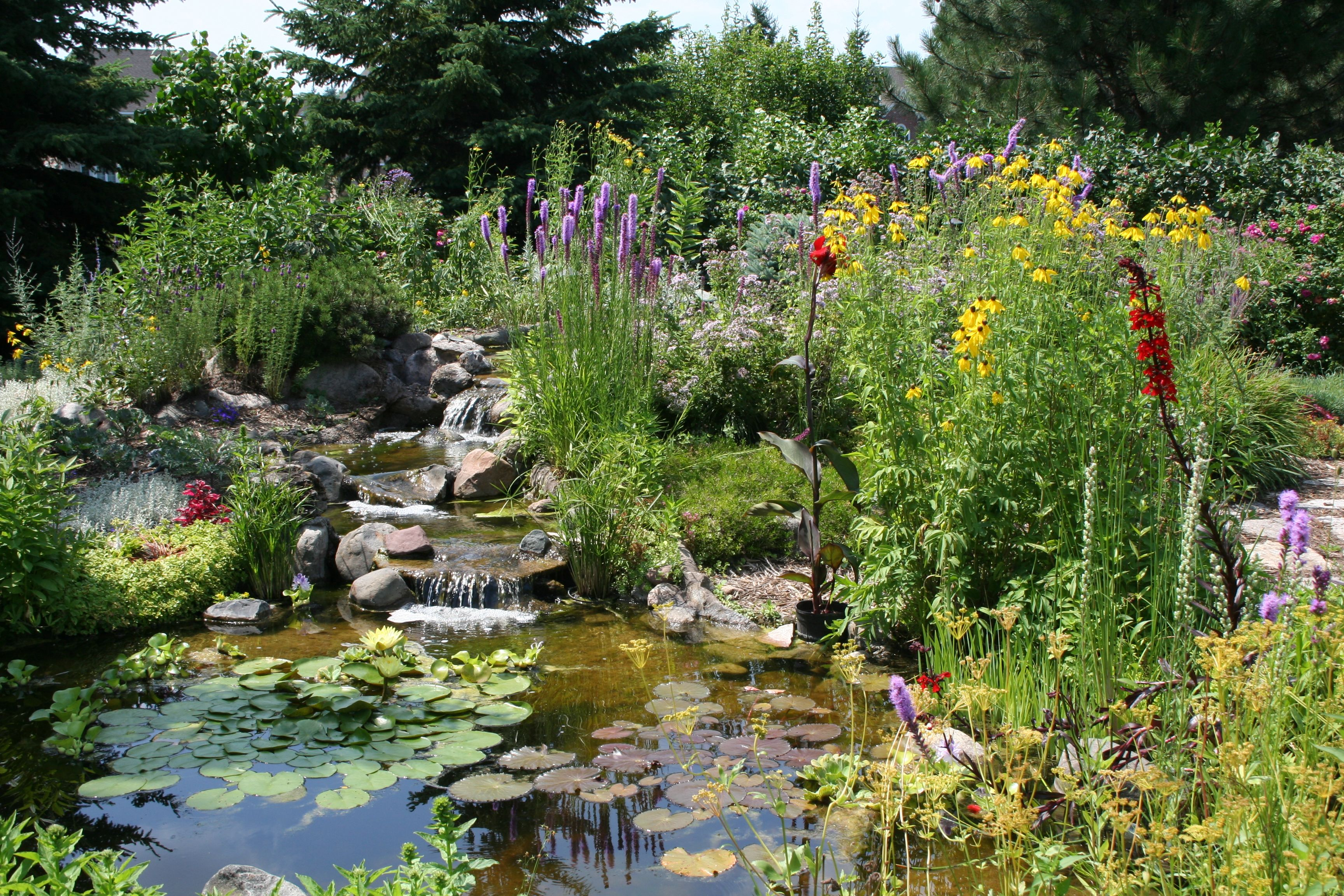 Wildlife gardening water and native plants create a for Backyard pond animals