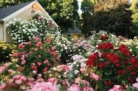 Výsledek obrázku pro cottage garden