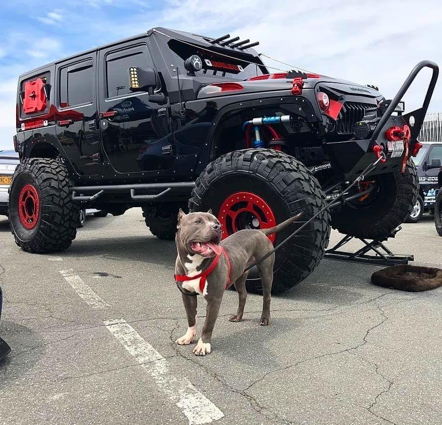 pitbull Dream cars jeep, Jeep suv, Offroad jeep