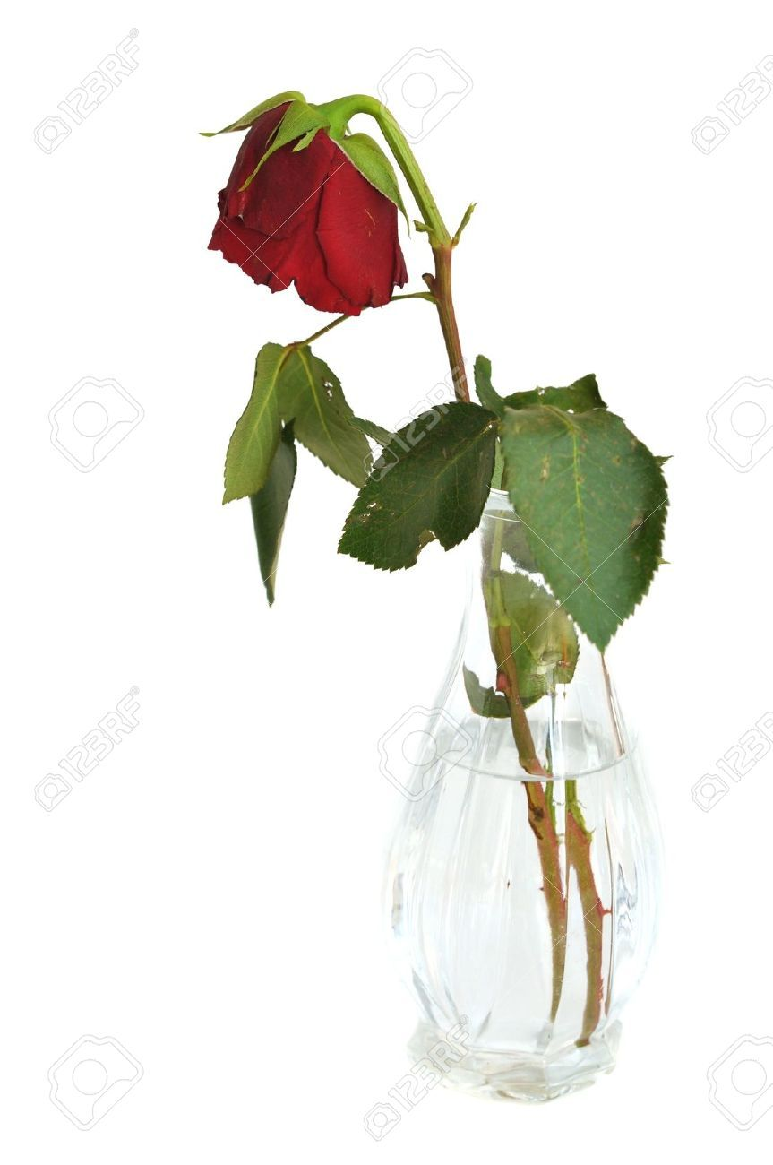 Dead rose in vase google search art references pinterest dead rose in vase google search floridaeventfo Choice Image