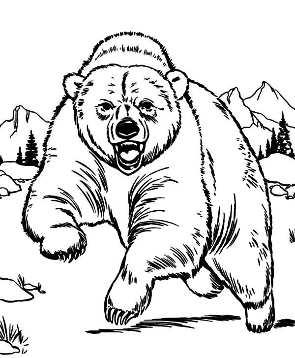 Grizzly Bear Coloring Pages Grizzly Bear Coloring Page Printable
