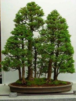 Formas Delicadas Y Armã Nicas Colores Vibrantes Y Espectaculares â No Existen Palabras Para Describir Estas Be Bonsai Tree Indoor Bonsai Tree Bonsai Garden