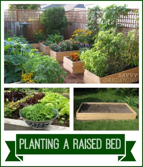 Planting A Raised Bed Tips On Spacing Sowing And Growing Plants Vegetable Garden Raised Beds Planting Flowers