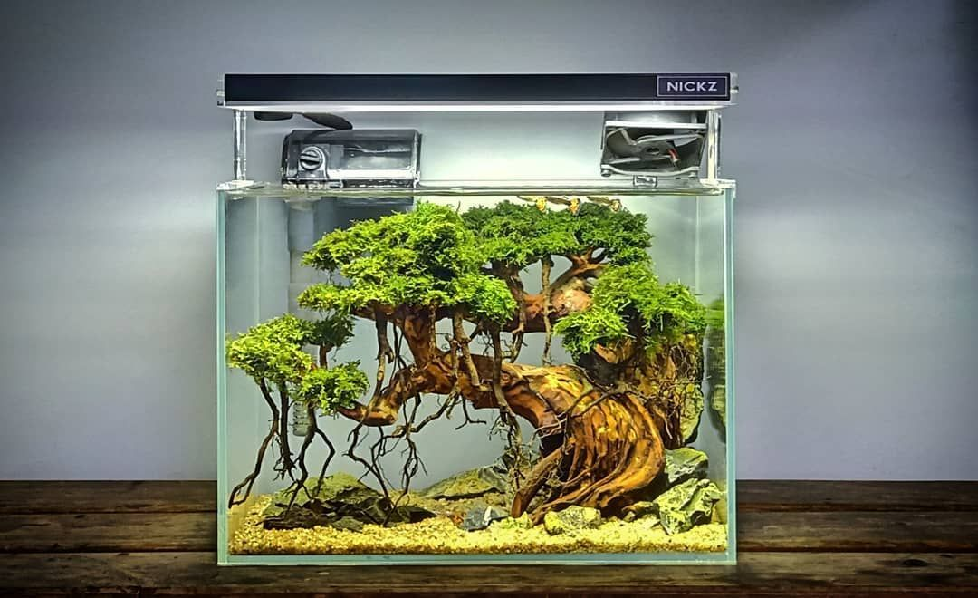 Sehr Erstaunlich Nano Cube Bonsai Baum Aquascape Tank Aquascape Aquascape Design Bonsai Tree