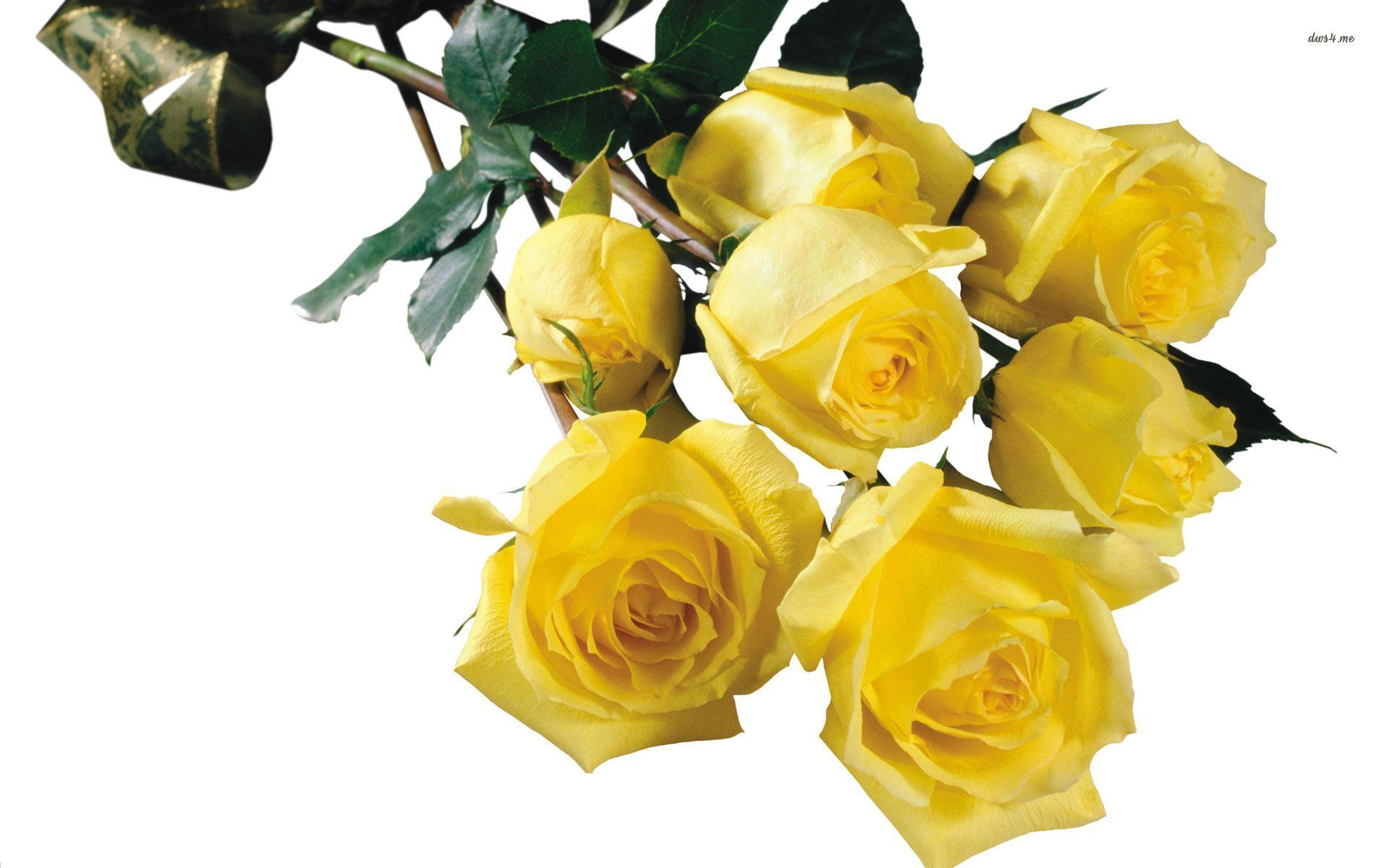 Yellow Roses Images Flowers Yahoo Image Search Results Flowers