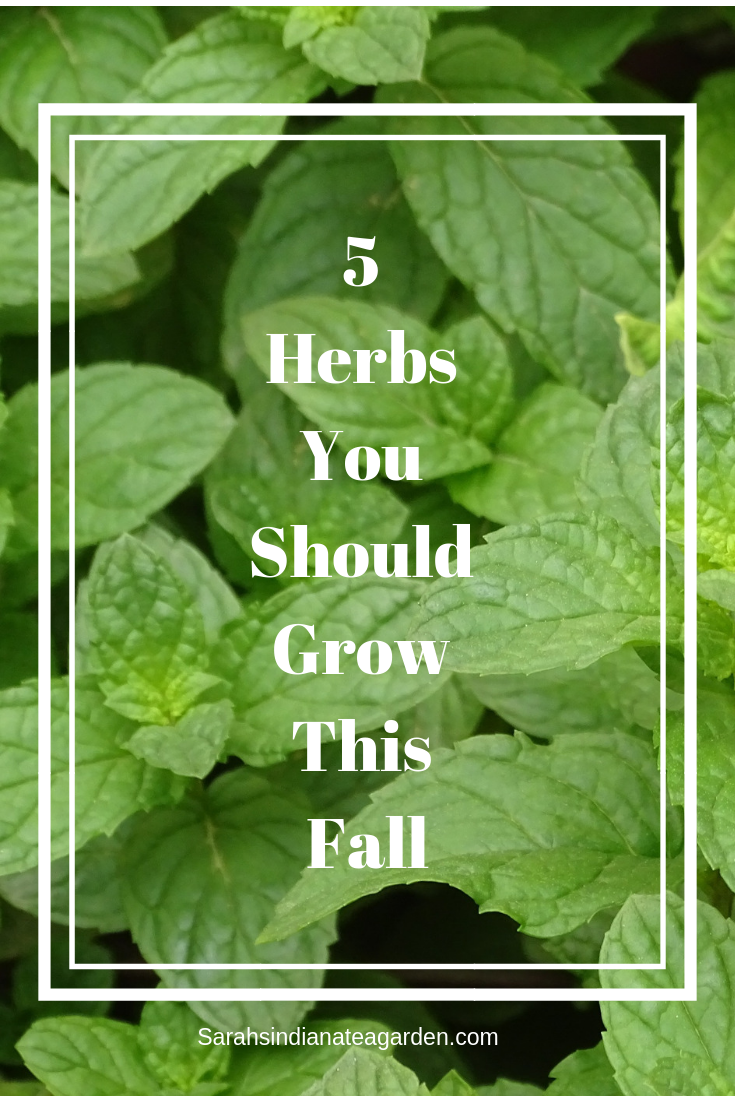 5 Herbs You Should Grow this Fall -
