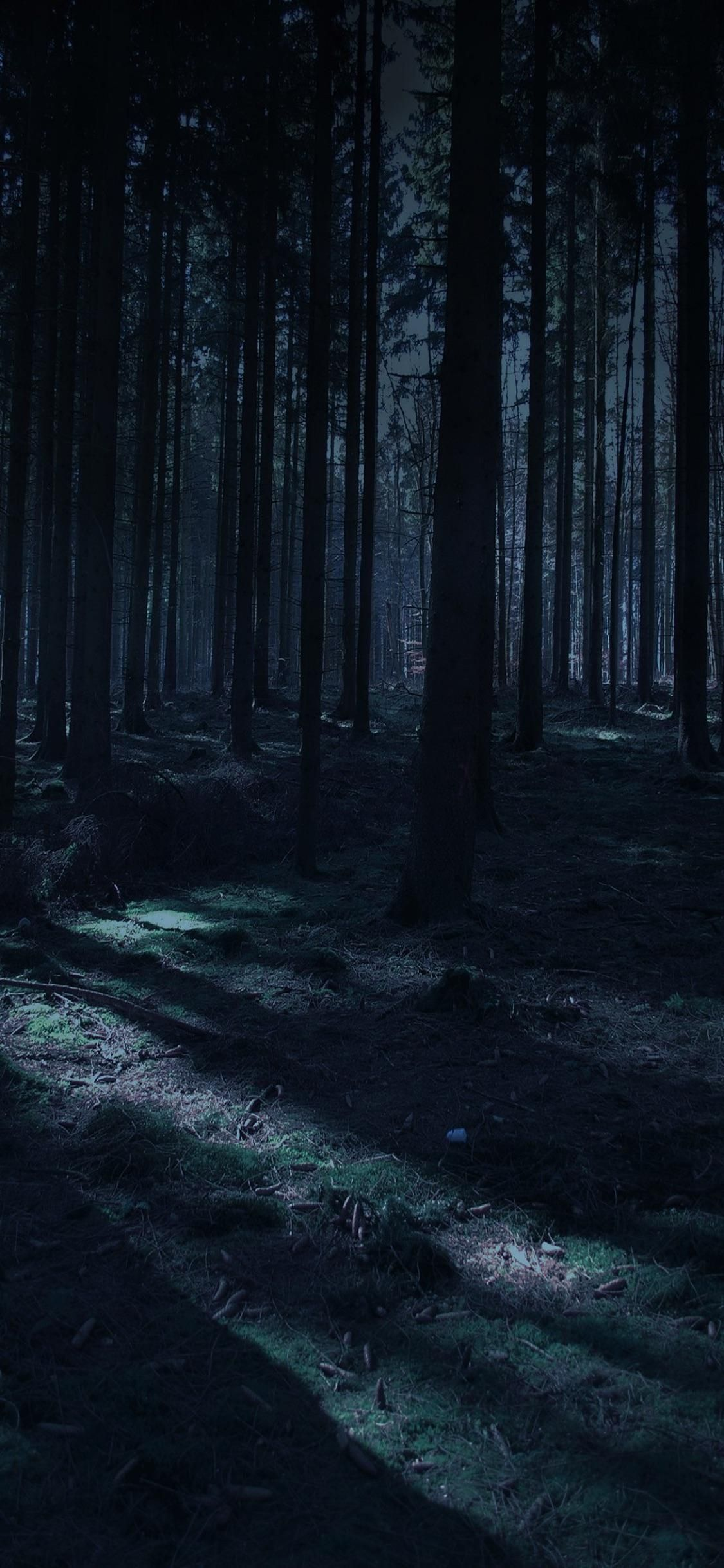 Dark Forest Iphone Wallpaper : forest, iphone, wallpaper, Forest, IPhone, Wallpapers, Landscape,, Forest,, Photography