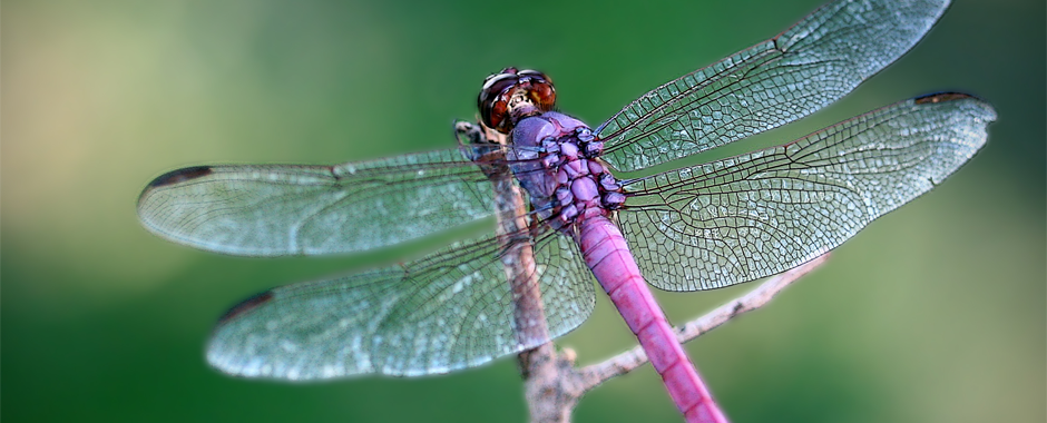 Account Suspended Dragonfly Images Dragonfly Meaning Dragonfly