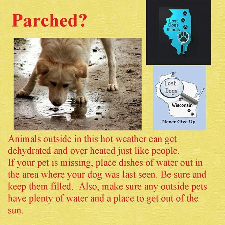 Parched Losing A Dog Pet Hacks Your Dog