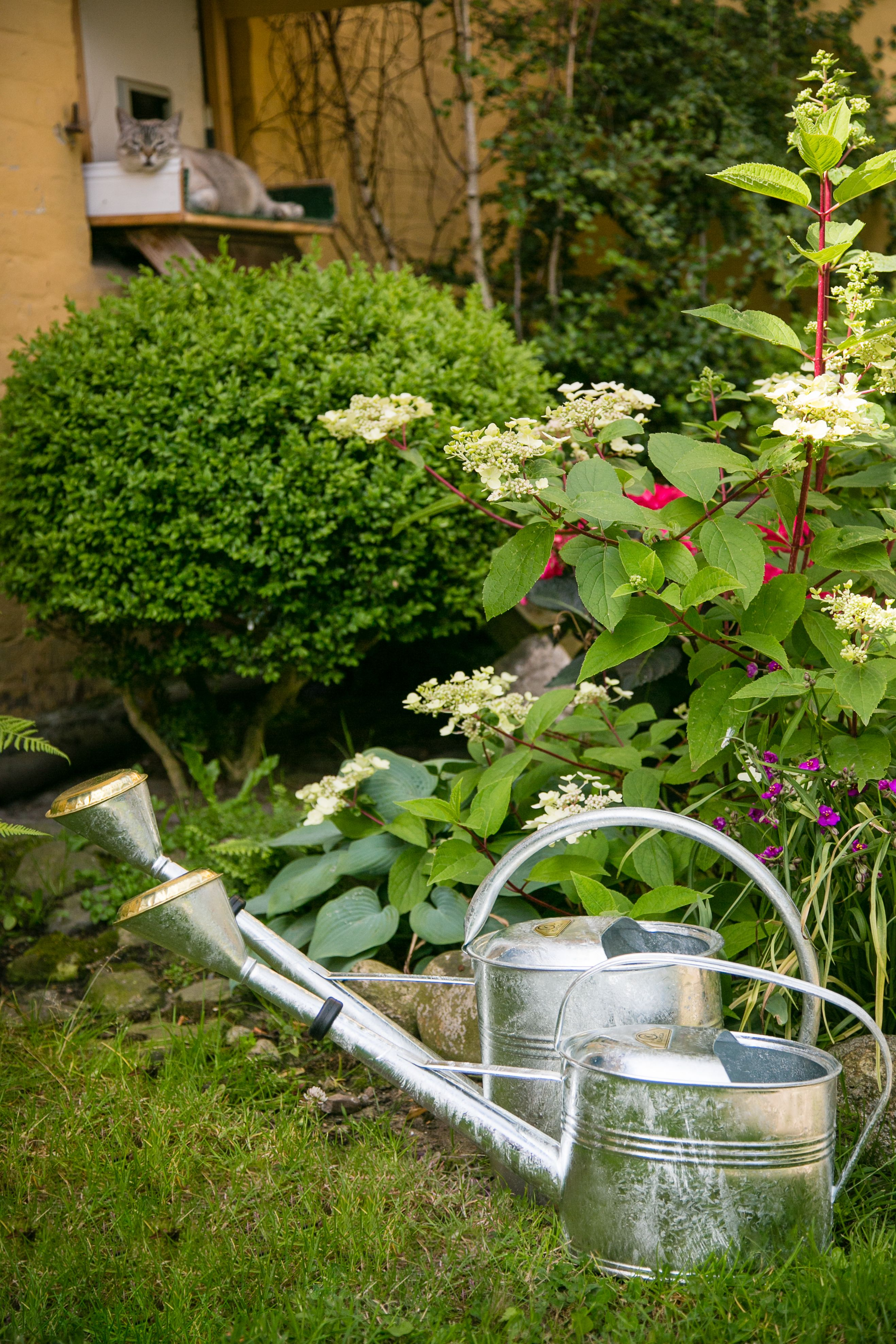 Kuheiga Com Ihr Online Shop Fur Gartenzubehor Wohnaccessoires Garten Pflanzen Garten Ideen