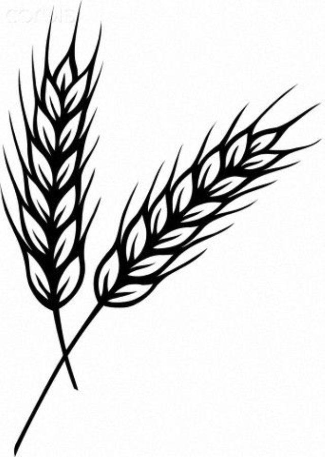 Картинка пшеница для детей нарисованные