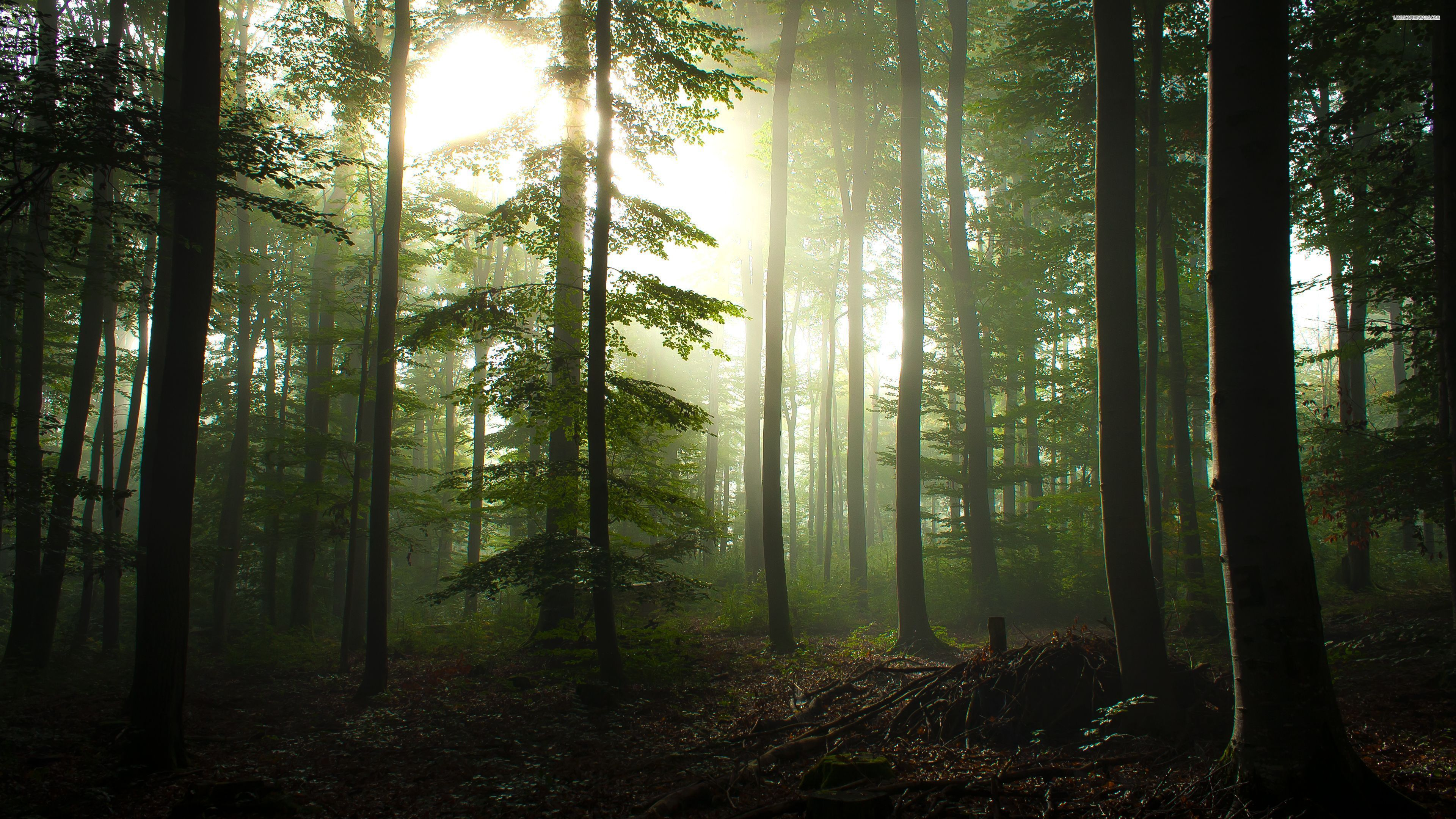 30 Top Foggy Forest Wallpaper 4k Forest Wallpaper Forest Photography Beautiful Forest