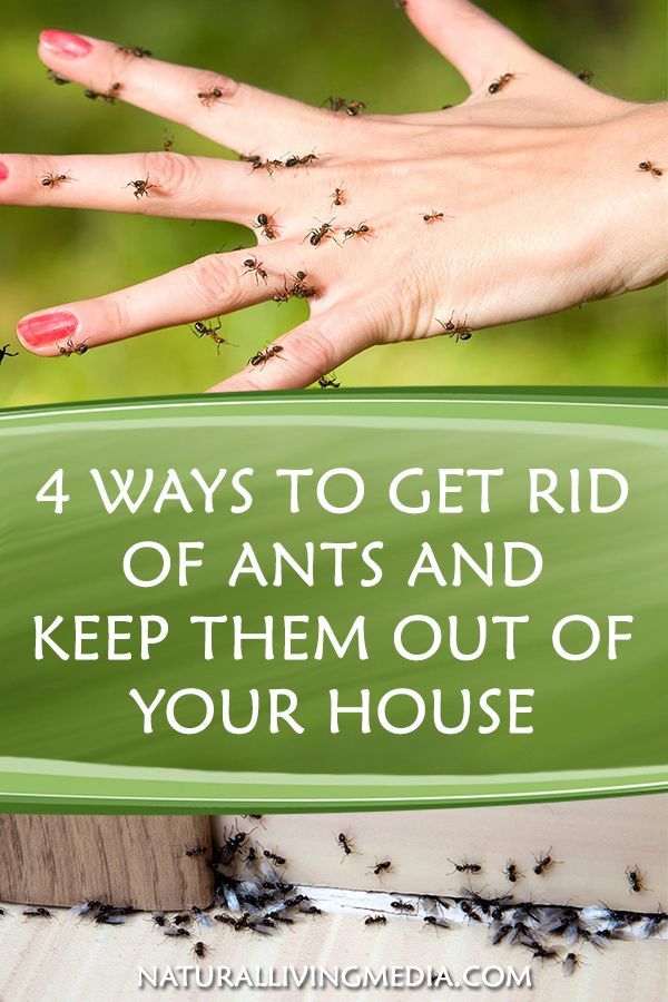 4 Ways To Get Rid Of Ants And Keep Them Out Of Your House