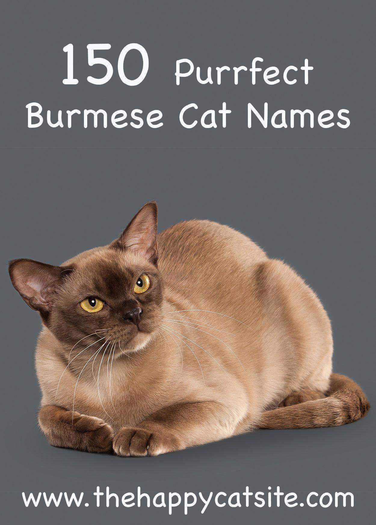 burmese cat names. Great names to call your cat. catfacts