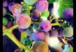Photos - WASHINGTON STATE WINERY NEWS #WAwine #Wine