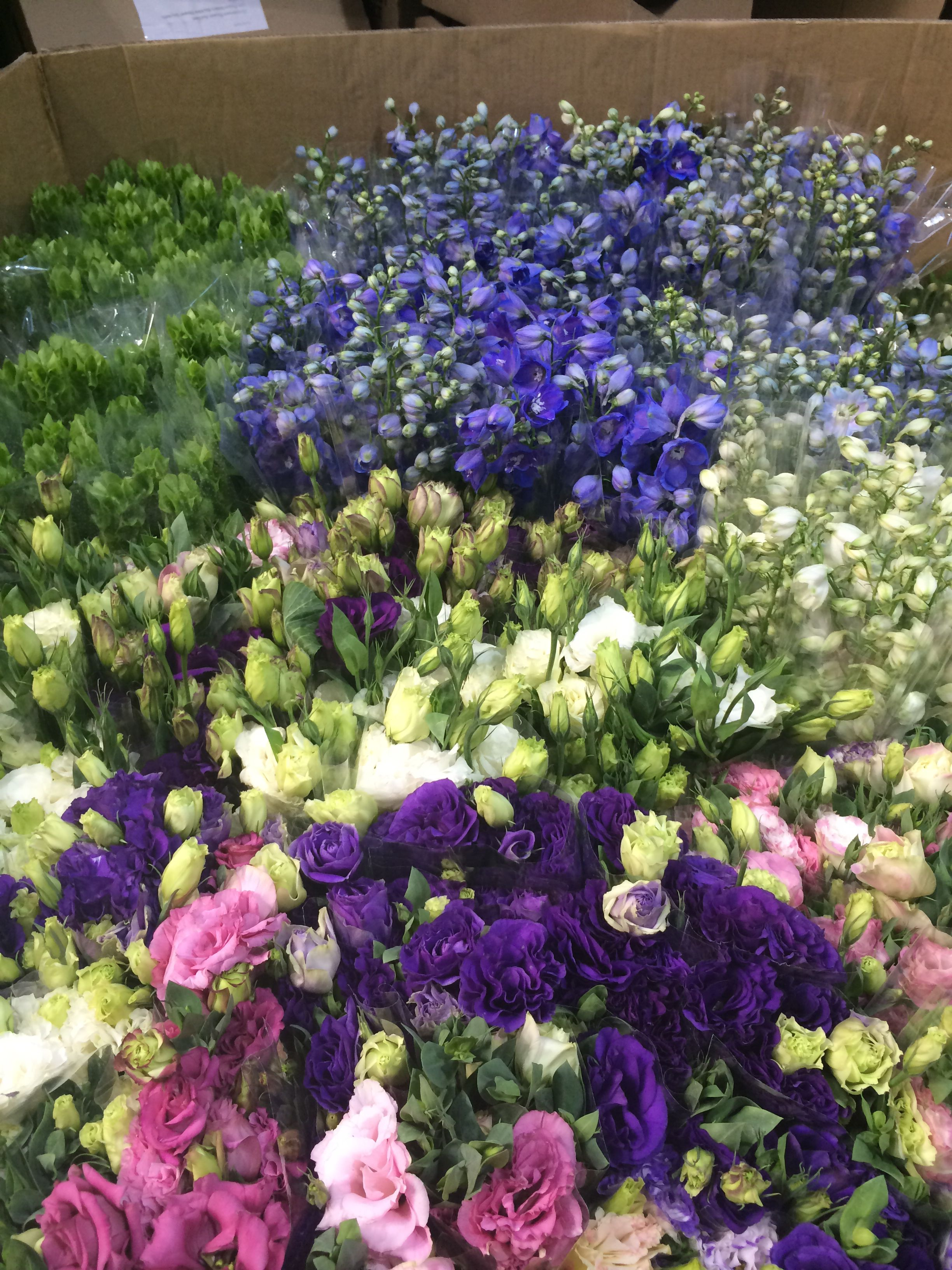 delphinium, Mollaca balm (Irish bells) and lissianthus arriving today last week of May