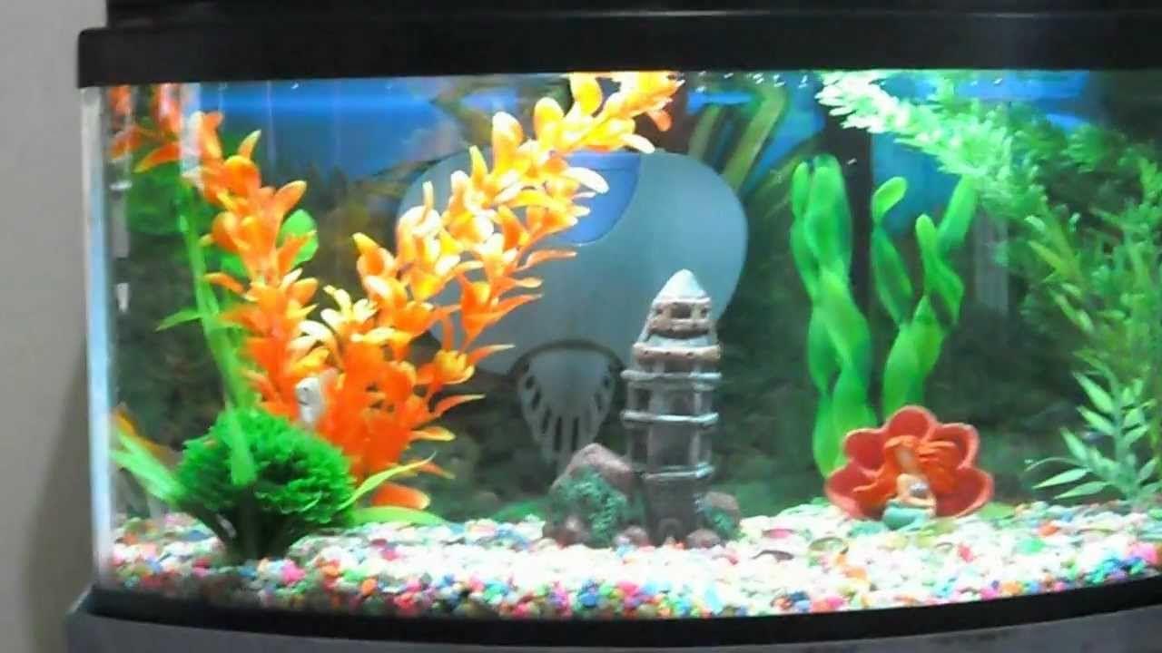 Peceras decoradas con corazones peces buscar con google for Peceras con peces