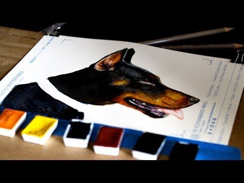 Dog Fur Watercolour Painting Tutorial How To Paint Using