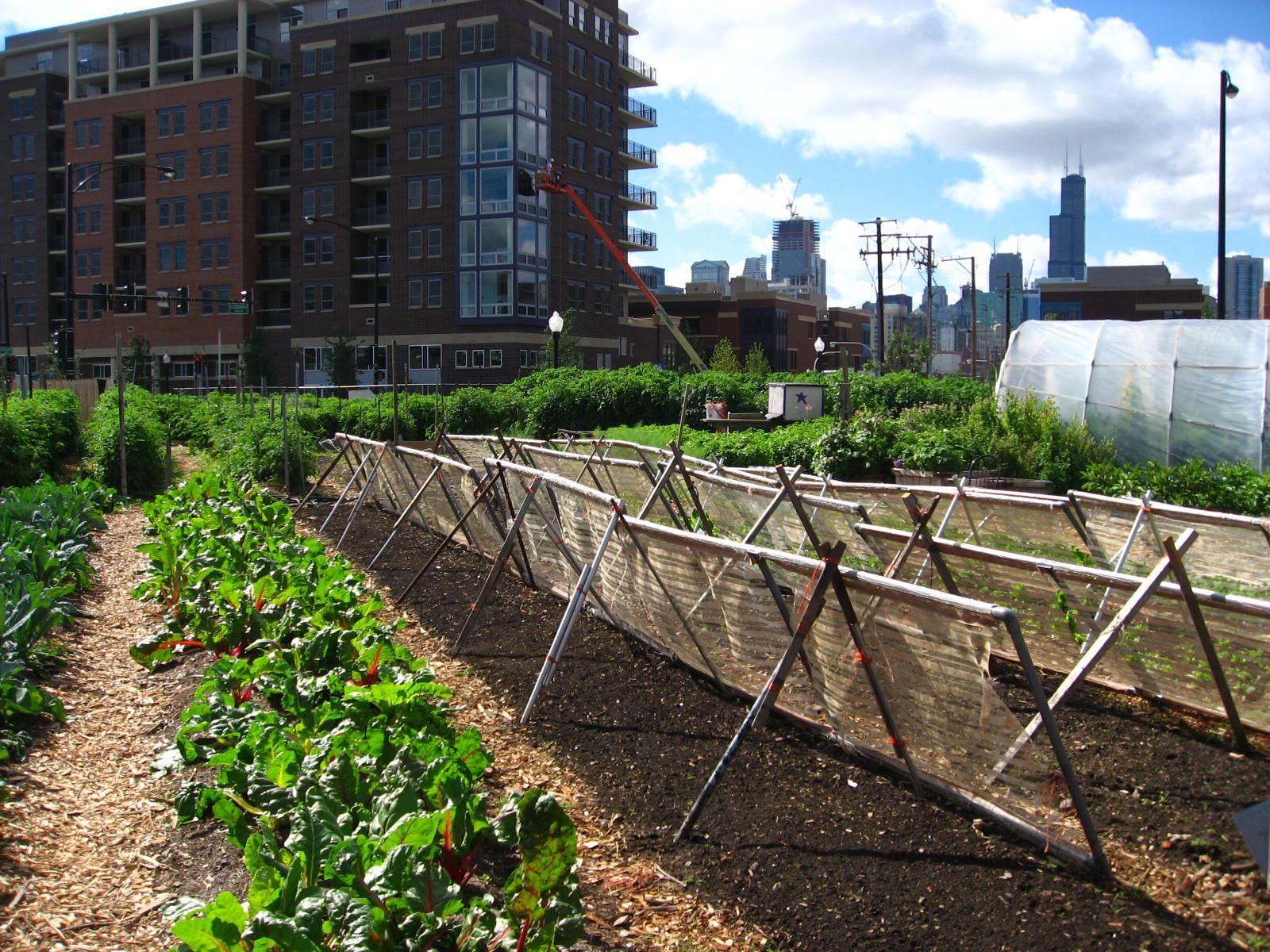 urban agriculture wikipedia the free encyclopedia urban