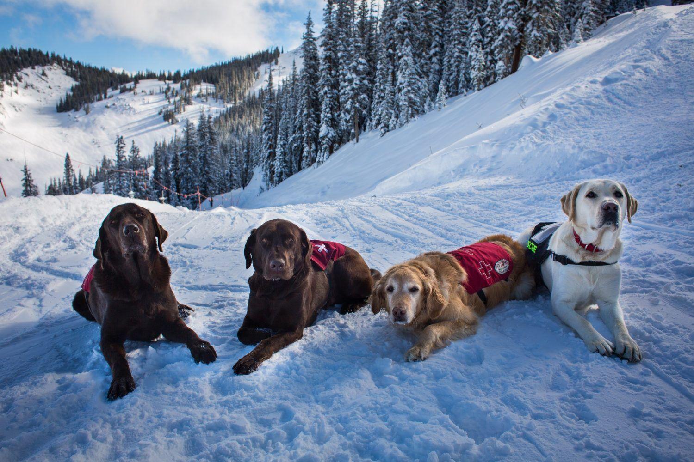 Meet 8 Of Colorado S Hardest Working Ski Dogs Winter Park Resort
