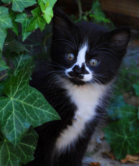 Pin By Sandy Navarro On Kitties Kittens Cats Cute Cats