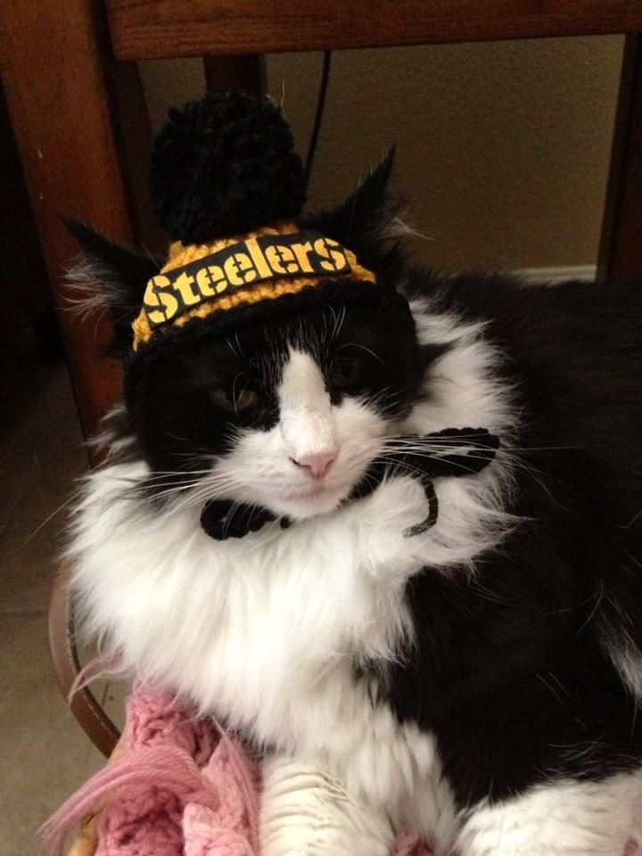 bbf58c290e2 Pittsburgh Steelers Dog Hats or Cat Hats Crocheted by Fancihorse, $6.00