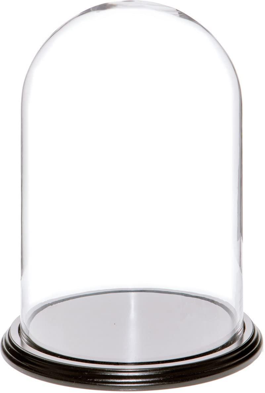 Amazon Com Plymor 8 X 12 Glass Display Dome Cloche Black Wood Base Home Kitchen Glass Dome Display Wood Veneer Black Wood