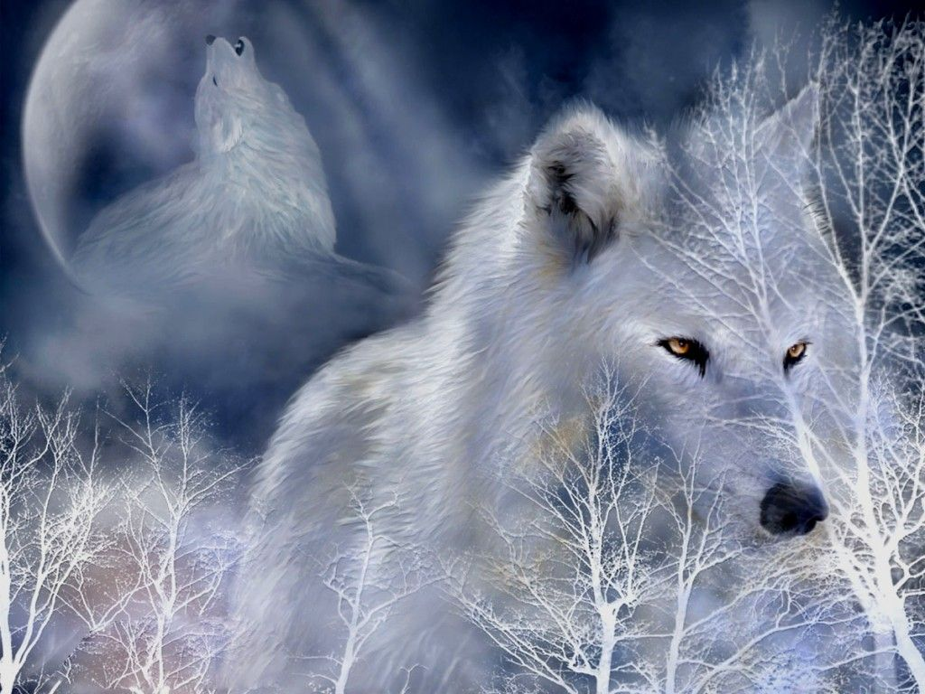 wolf pictures in fantasy white wolf hd fantasy pictures