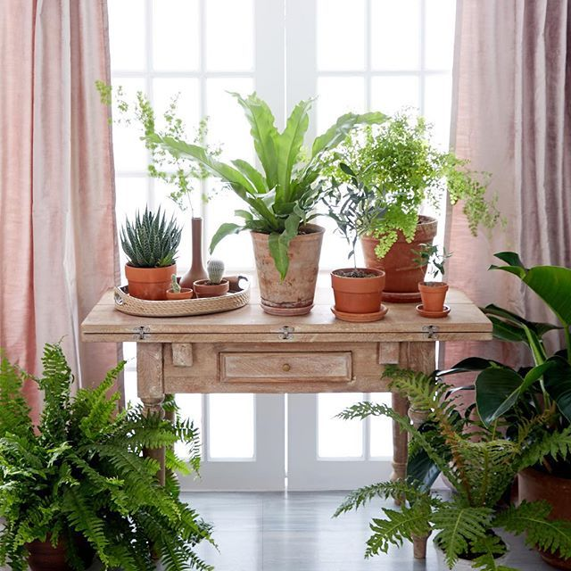 Garden House Beautiful Magazine Inspires Garden Lovers: A Collection Of Plants In A Sun-filled Entryway