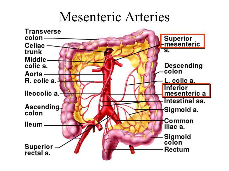 Mesenteric Vessels Gallery Coding Pinterest Radiology