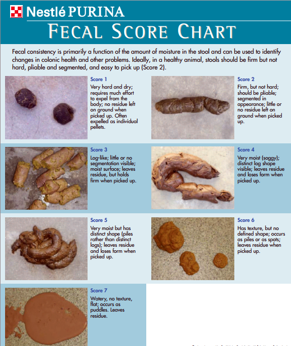 Dog poop score chart  1tsp to 1TBS Canned pumpkin (not pie filling