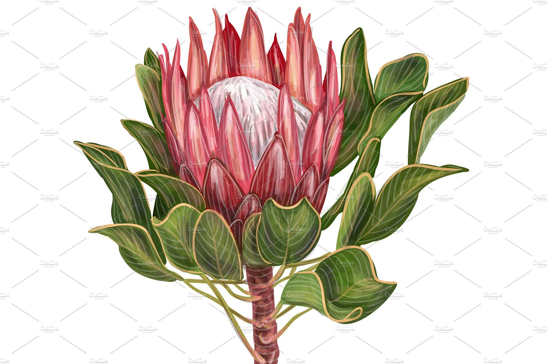 Protea Flowers Awesome Blossom How To Draw Hands Birthday Cards For Women Birthday Card Drawing