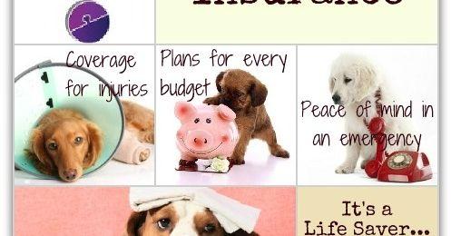 best pets insurance