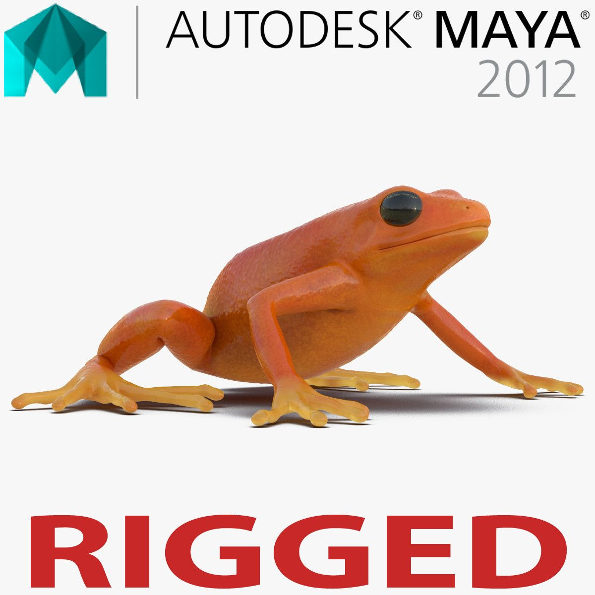 Mantella Frog 3d model Rigged for Maya