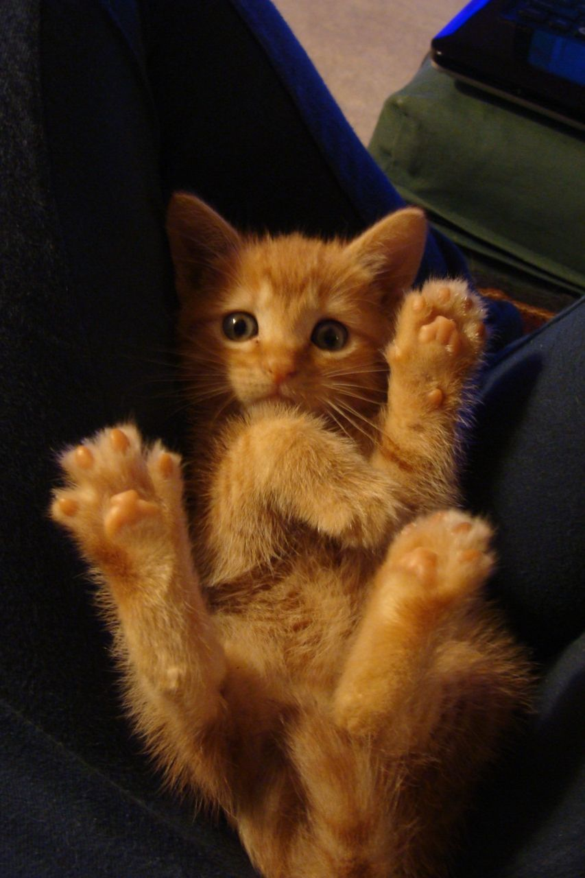 orange toes. look like beans <3