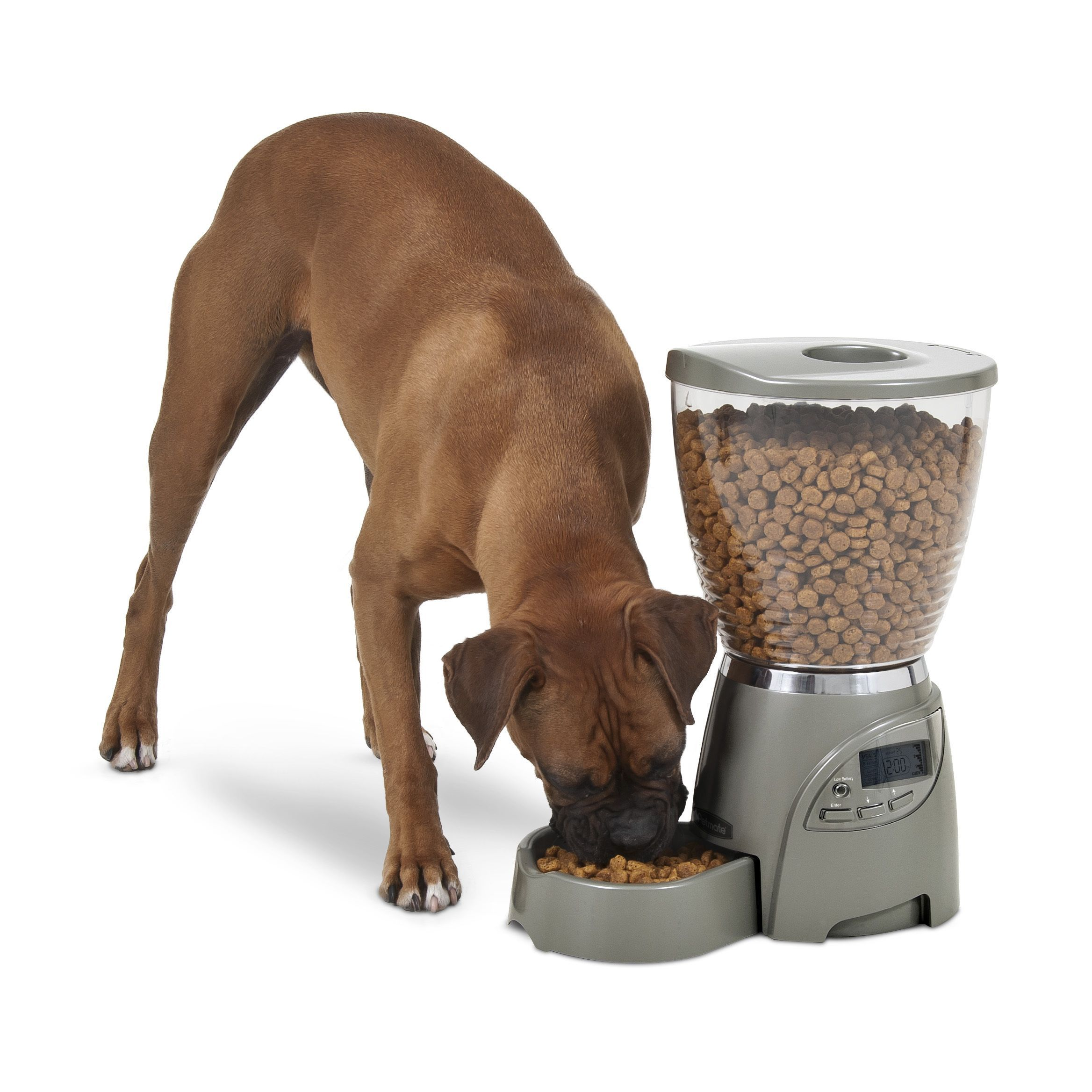 Petmate Food Dispenser Petmate Portion Right Programmable Cat Or Dog Feeder  Cat Feeders