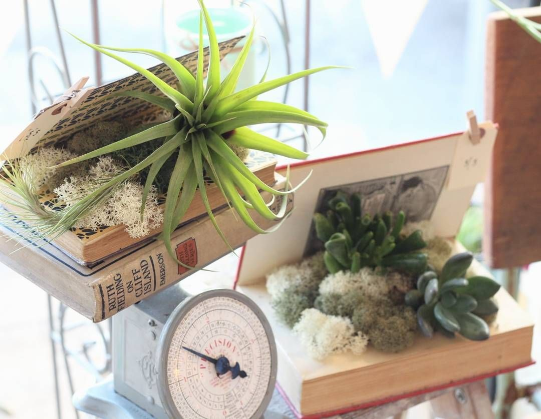 nice vancouver florist Restocked our antique book succulent and tillandsia planters at @brickandmortarliving. $55 a pop! And yes, they're real! by @blossomandvinefloralco  #vancouverflorist #vancouverflorist #vancouverwedding #vancouverweddingdosanddonts