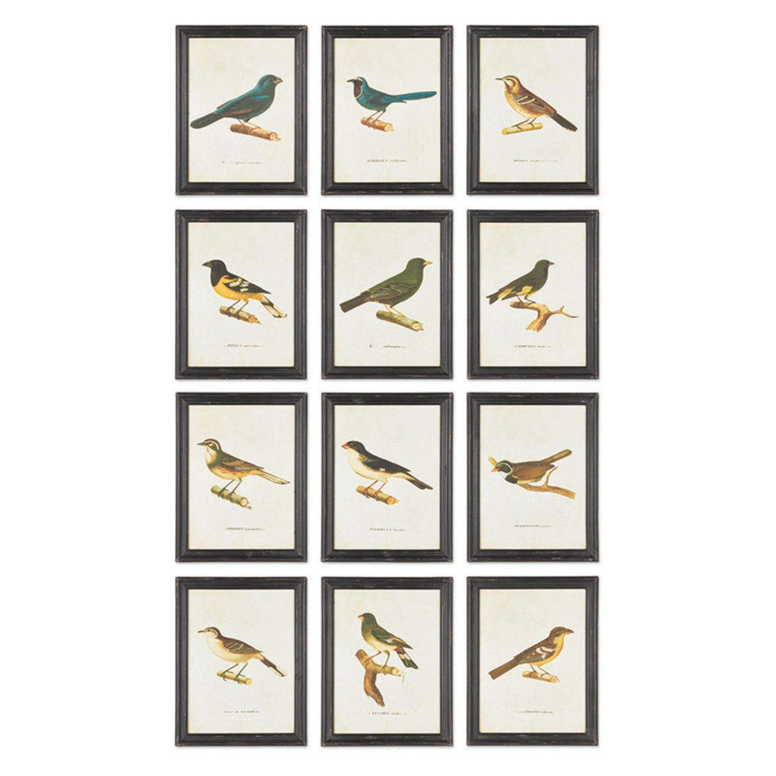 Napa Home and Garden Bird Print Wall Panel Set of 12