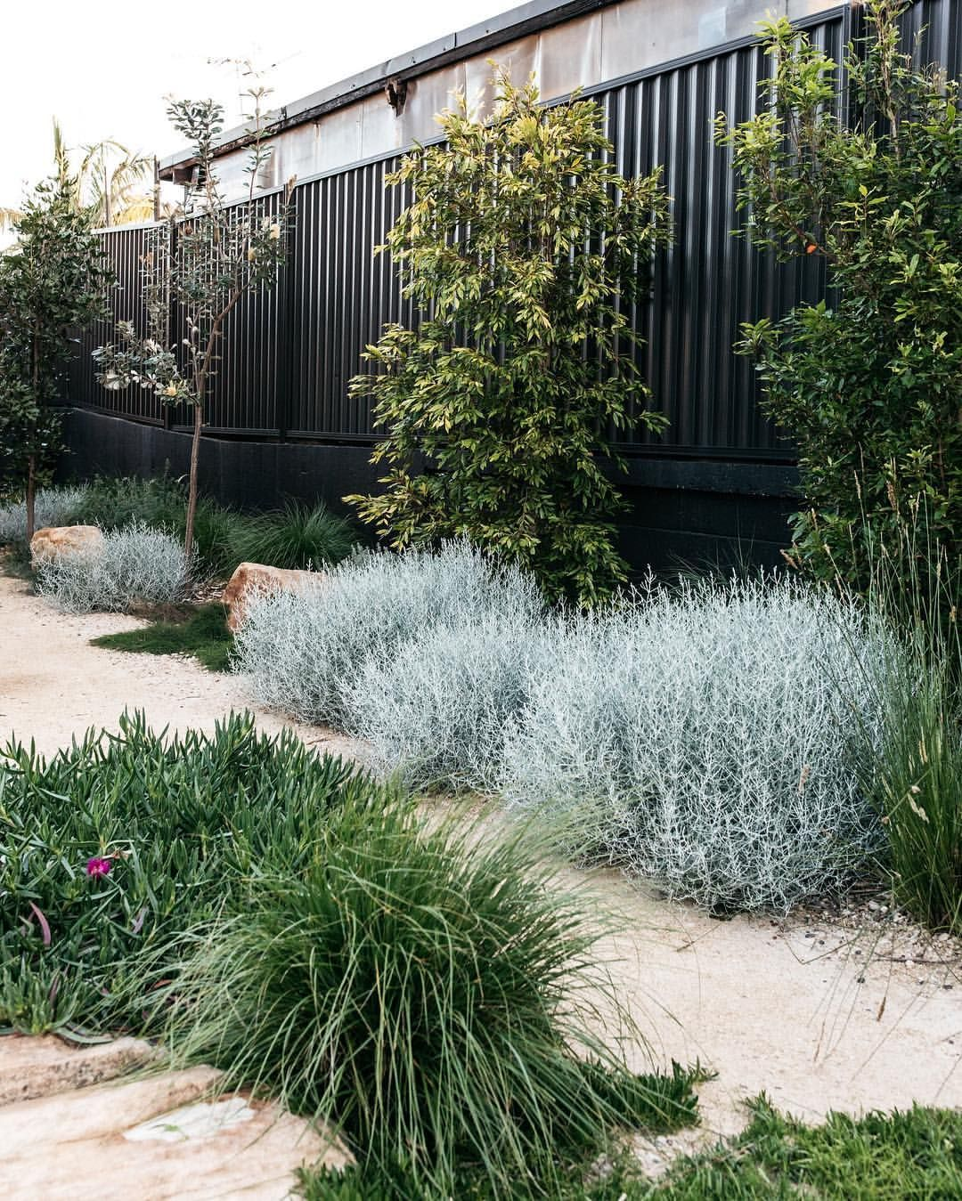A simply beautiful contemporary Australian native Garden done so well. Garden design @fig_landscapes Plants supplied by @exotic_nurseries… #contemporarygardendesign