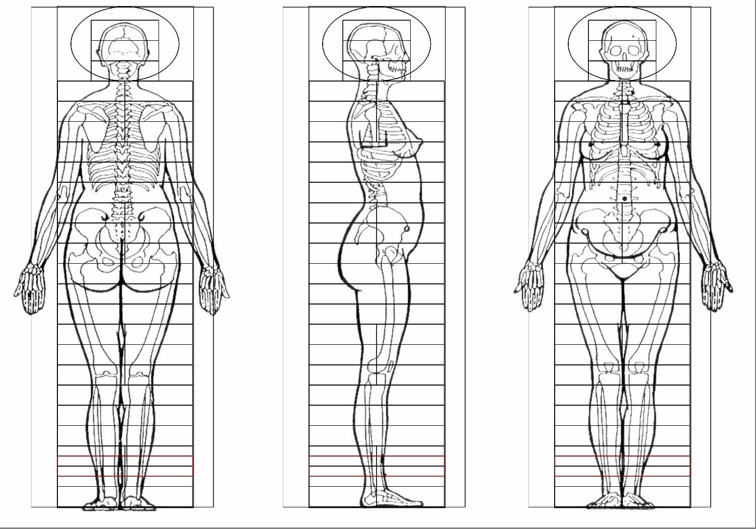 Turnaround View Female Figure Template Anatomy Standing