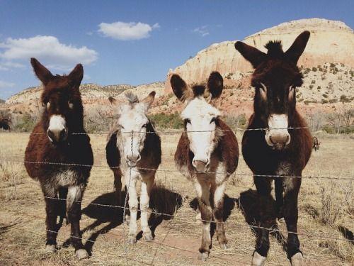 \\burros