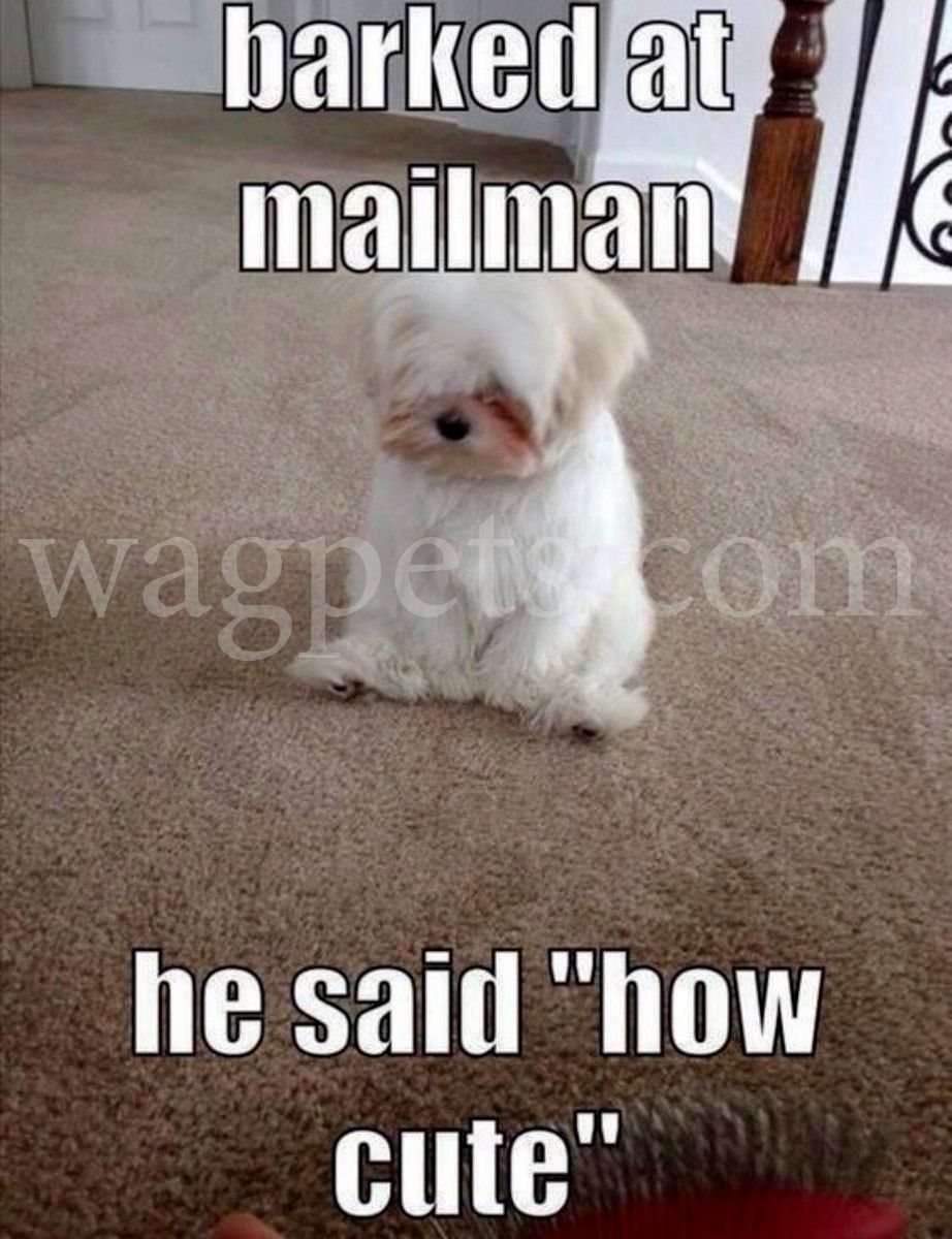 Barked at mailman u he said how cute cute pinterest animales