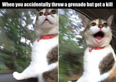 WHOA!! lol gaming gamer funny Funny animal pictures