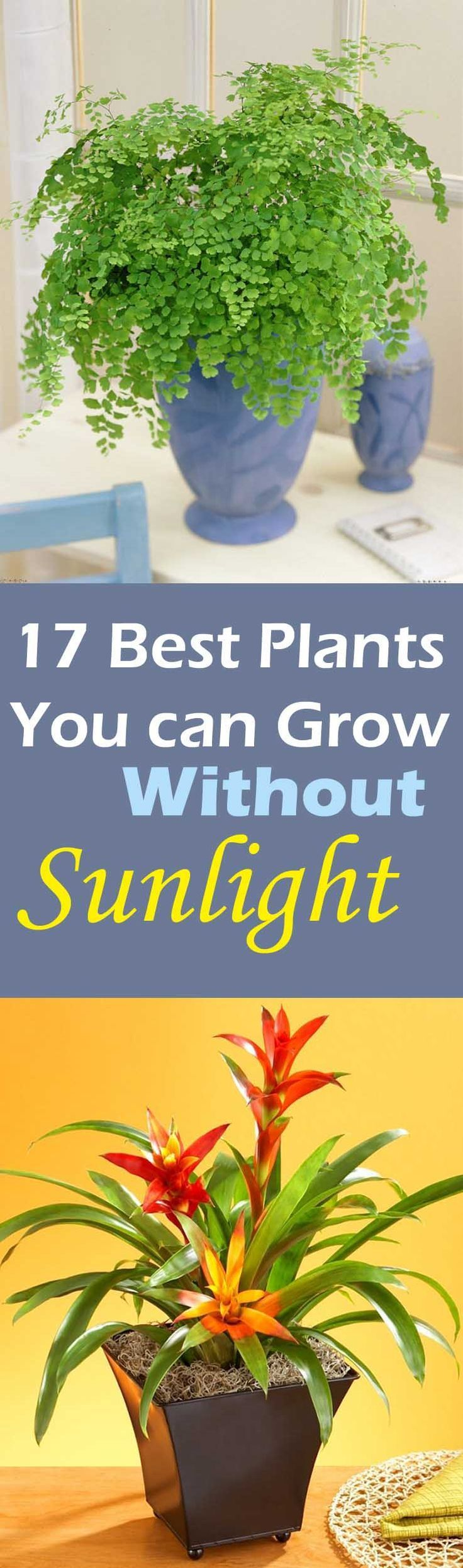 Best Plants to Grow Indoors without Sunlight Sunlight Plants