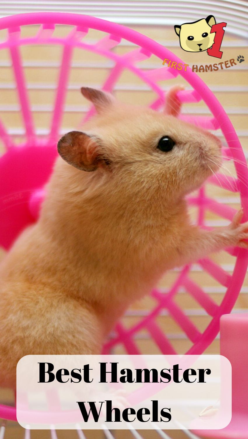 4 Best Hamster Wheels For Syrian And Dwarf (An Owner's