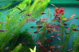 Resultado de imagem para Aquários de peixe