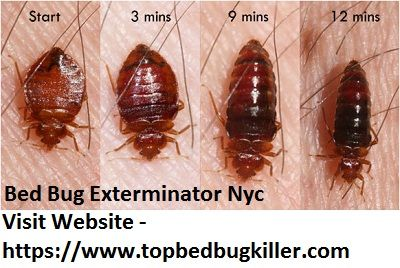 Pin By Pheyntai On Bed Bug Exterminator Nyc Bed Bugs Bug