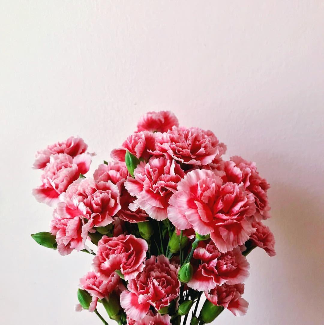 Buy yourself flowers for your birthday embracethebright buy yourself flowers for your birthday embracethebright izmirmasajfo