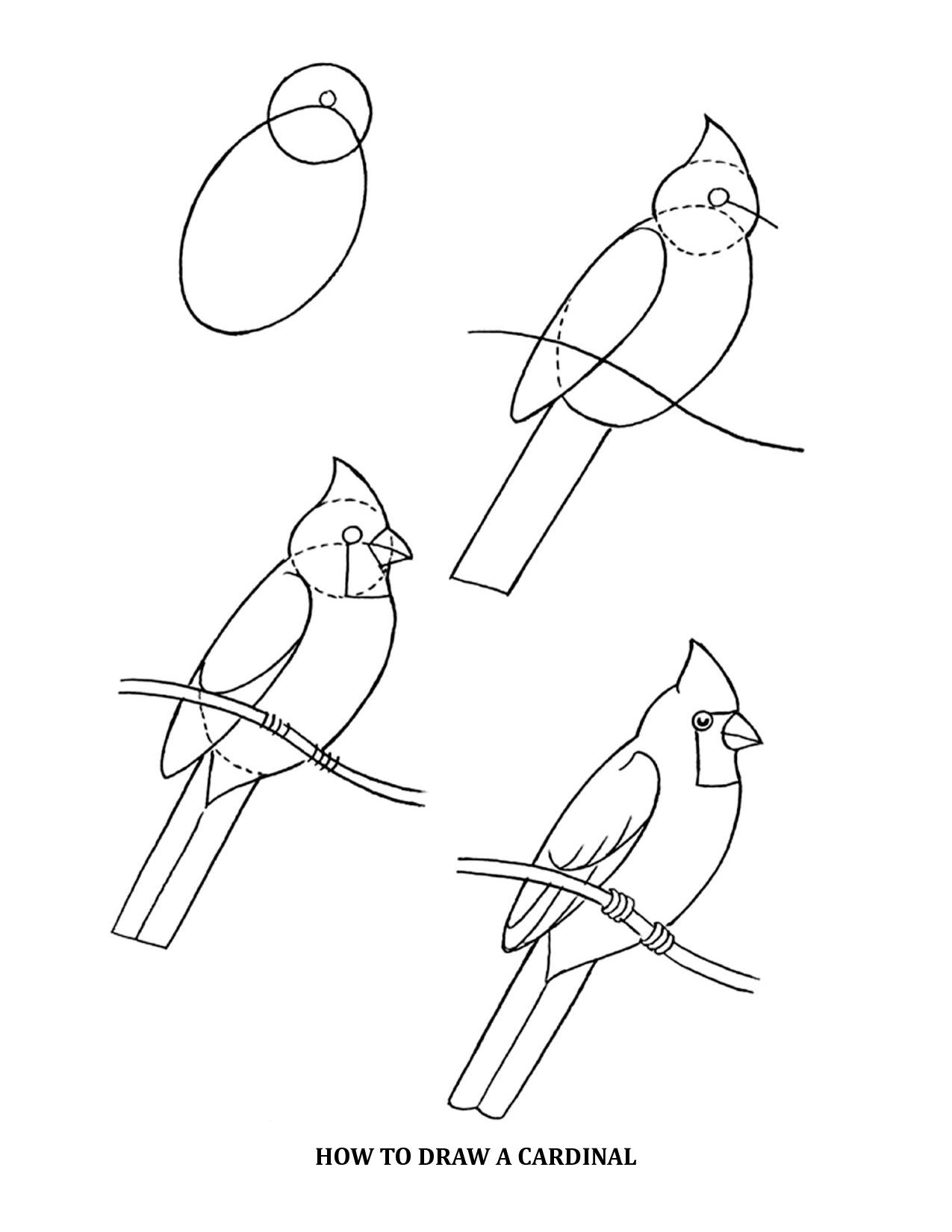 Cómo Aprender a Dibujar Cardenales (Aves). | ¿Cómo Puedo Aprender a ...