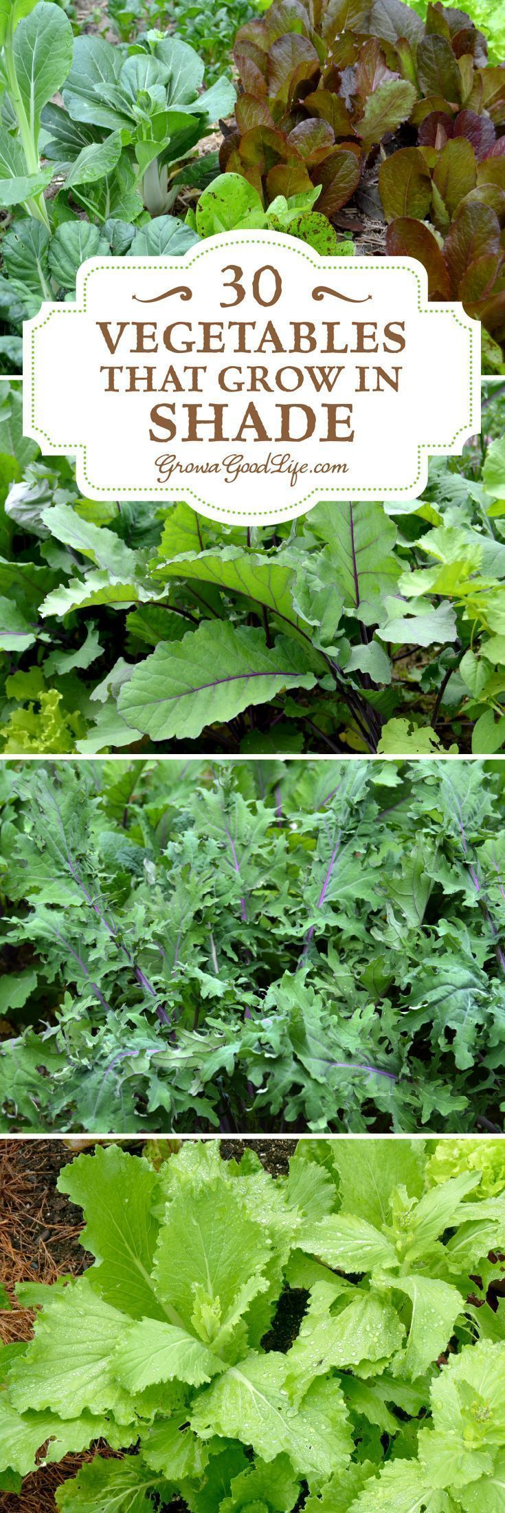 Vegetables That Grow in Shade Do you have an area of your garden that is shaded part of the day If you think you cant grow anything there, you are wrong. There are many vegetables that grow in shade. Some even thrive when sheltered from the intense rays from the summer sun. Consider experimenting with these vegetables that grow in shade.Do ...